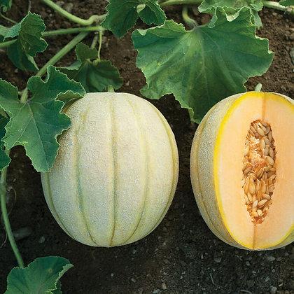 Melon cantaloup - Halona