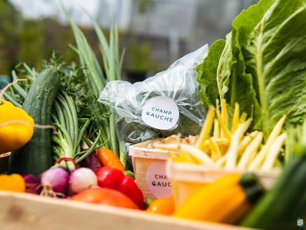 Des légumes tout droit sortis du Champ Gauche!