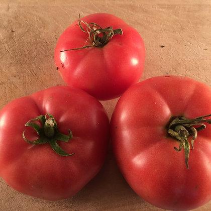 Tomate - Mac Pink