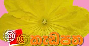 Kadapatha July 2020