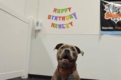 Harley birthday