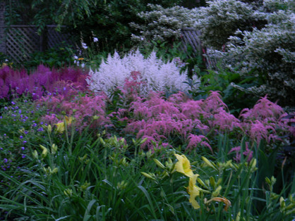 Astilbe glows in the early morning light in this South Dennis garden