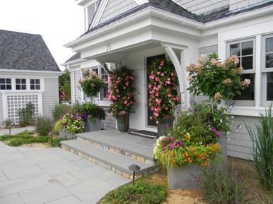 Bright and exuberant annuals