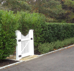 A solitary white gate between the privet