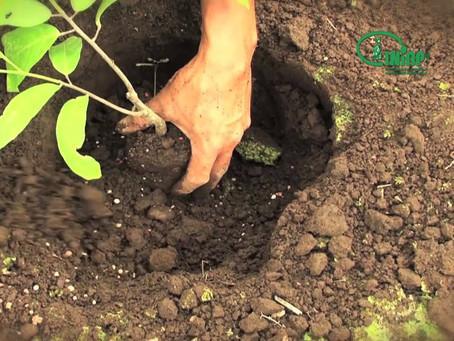 Familias indígenas de la zona sur reactivan sus economías a partir del cacao