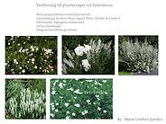 Växtförslag till Sjöbodarna 1.jpg
