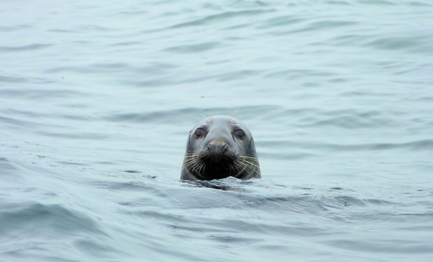 free seal.jpg