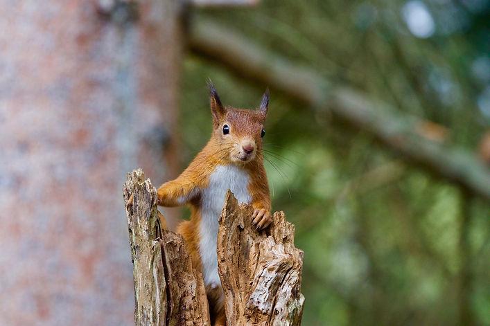 free squirrel2.jpg