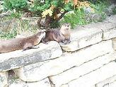 phillips-park-zoo.jpg