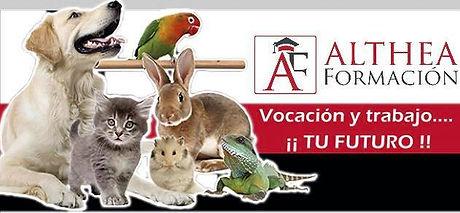veterinaria.jpg