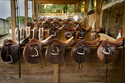 The saddles of Chastain Horse Park