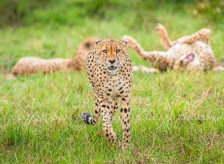 Safari Photo Tips: Secondary Background Subjects