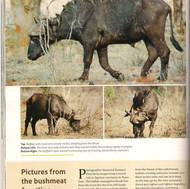 Shazaads photos in swara magazine