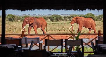 ngutuni-safari-lodge (1).jpg