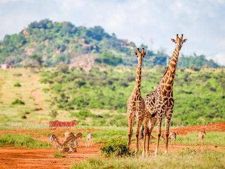 Tsavo East Safari In One Day From Mombasa and Diani Beach, Kenya
