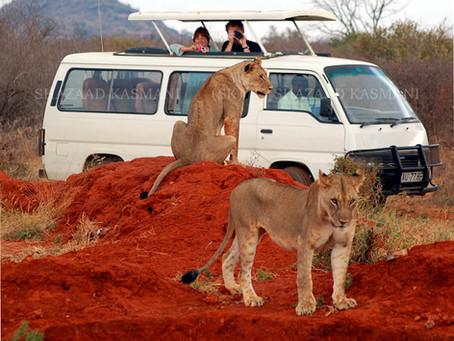 A Kenya Safari Minibus Offers Economy and Comfort