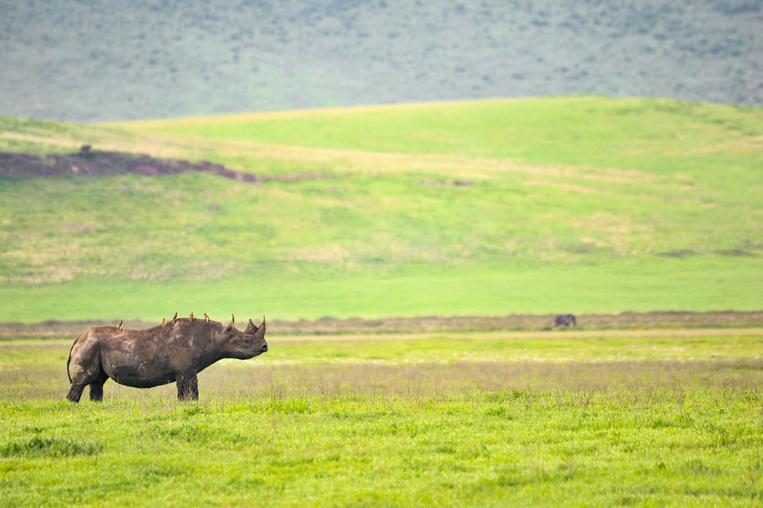 Wild Kenya Safaris
