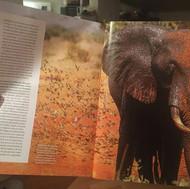 Shazaads elephant photo in national geographic magazine