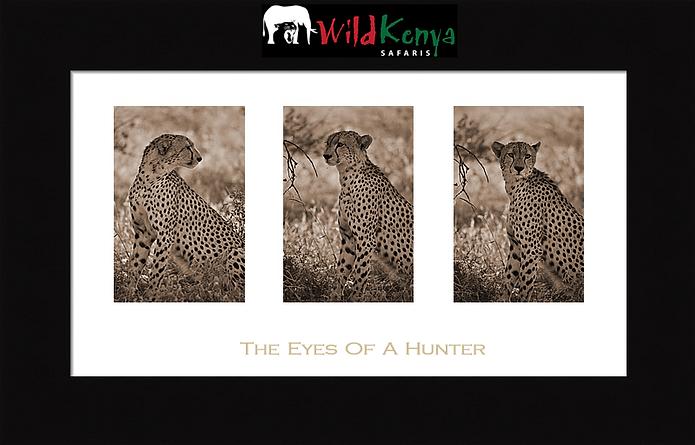book a kenya safari, african safari, wild kenya safaris