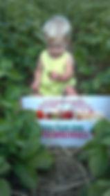 first time berry picker ,kid.jpg