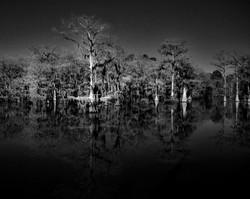 giants of the bayou bw 2.2.jpg
