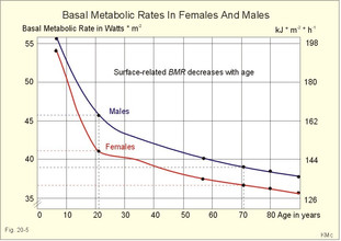 Why basing your diet on your Basal Metabolic Rate (BMR) is a sham
