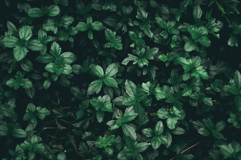 greenlipsbeauty-banneri-vihreä