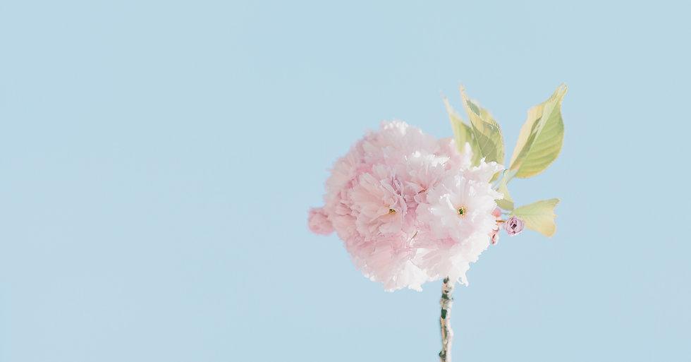 beautiful-blooming-bright-1098520_edited.jpg