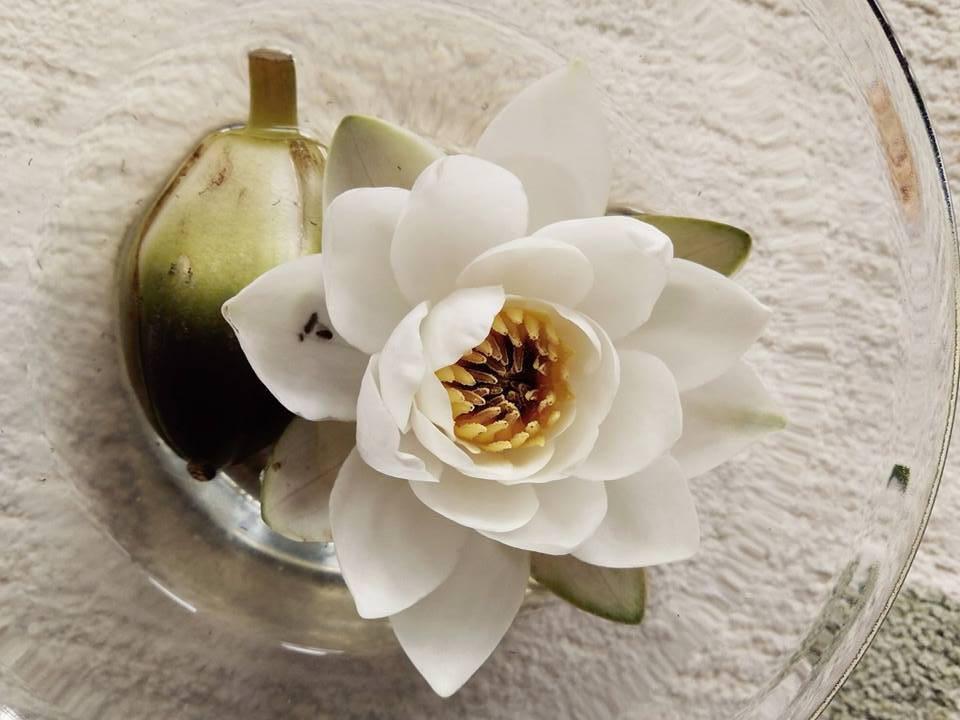 Luomukosmetologi - Greenlips Beauty Luomuhoitola