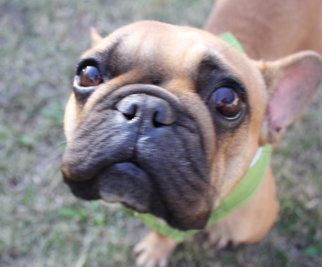 Doggiez4Doggiez