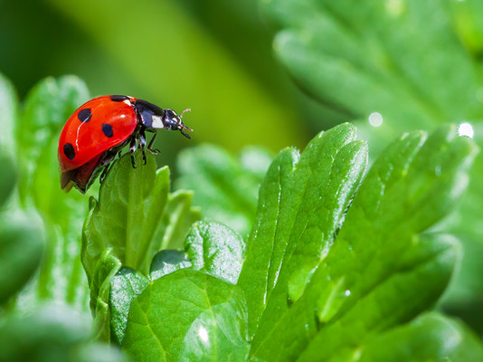 'Ladybird On the Edge' by Ossie Bruce