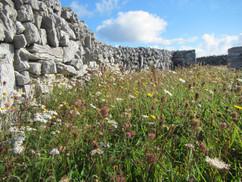 Species rich grassslands score 5