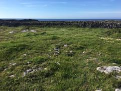 Calcareous grassland