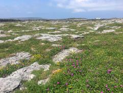 Calcareous grassland - limestone pavement mosaic