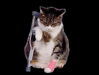 Sonhar-com-gato-machucado2-removebg-prev