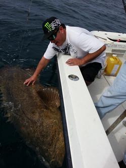 550 pound goliath catch offshore