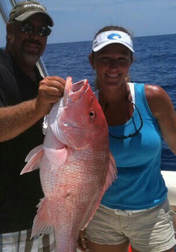 American Red Snapper ARS guaranteed