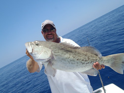 Gag grouper caught offshore fishing