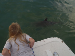Dolphin watch as we get close