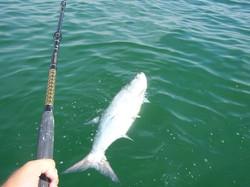 The majestic Tarpon fishing