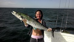 Kingfish season hits twice a year