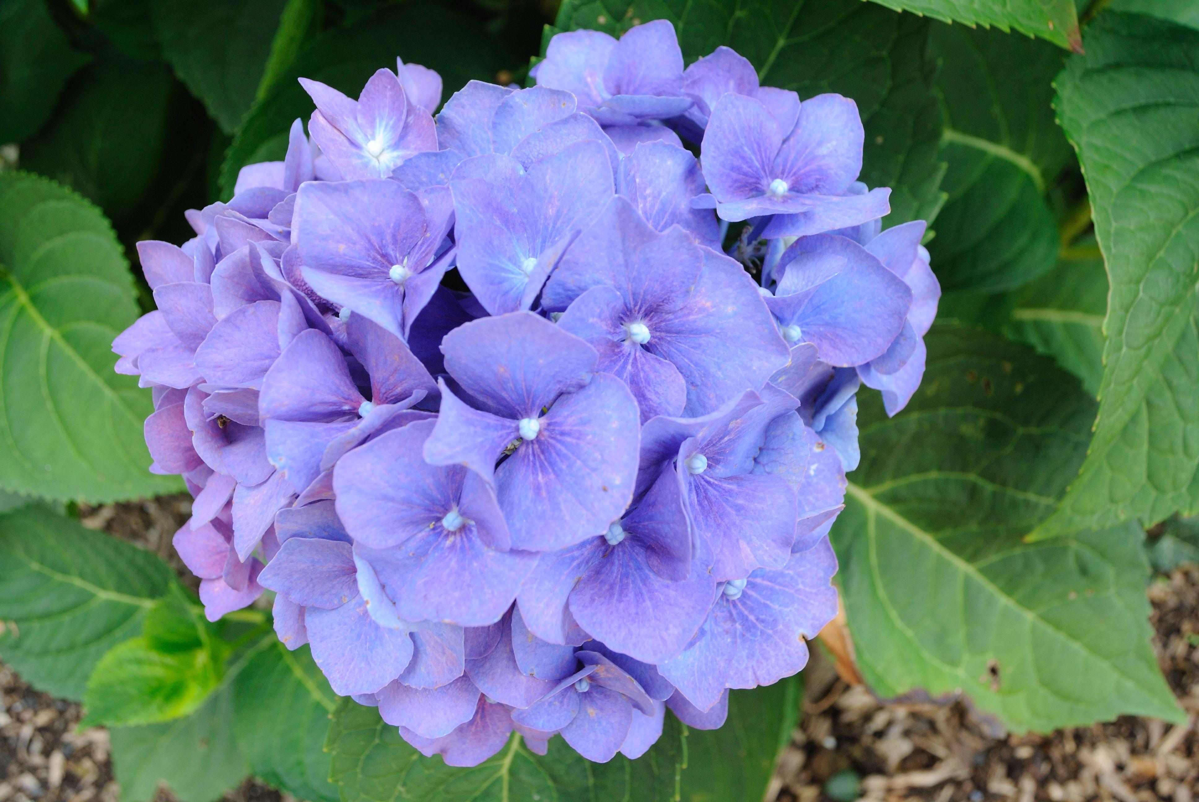 044 PURPLE FLOWER