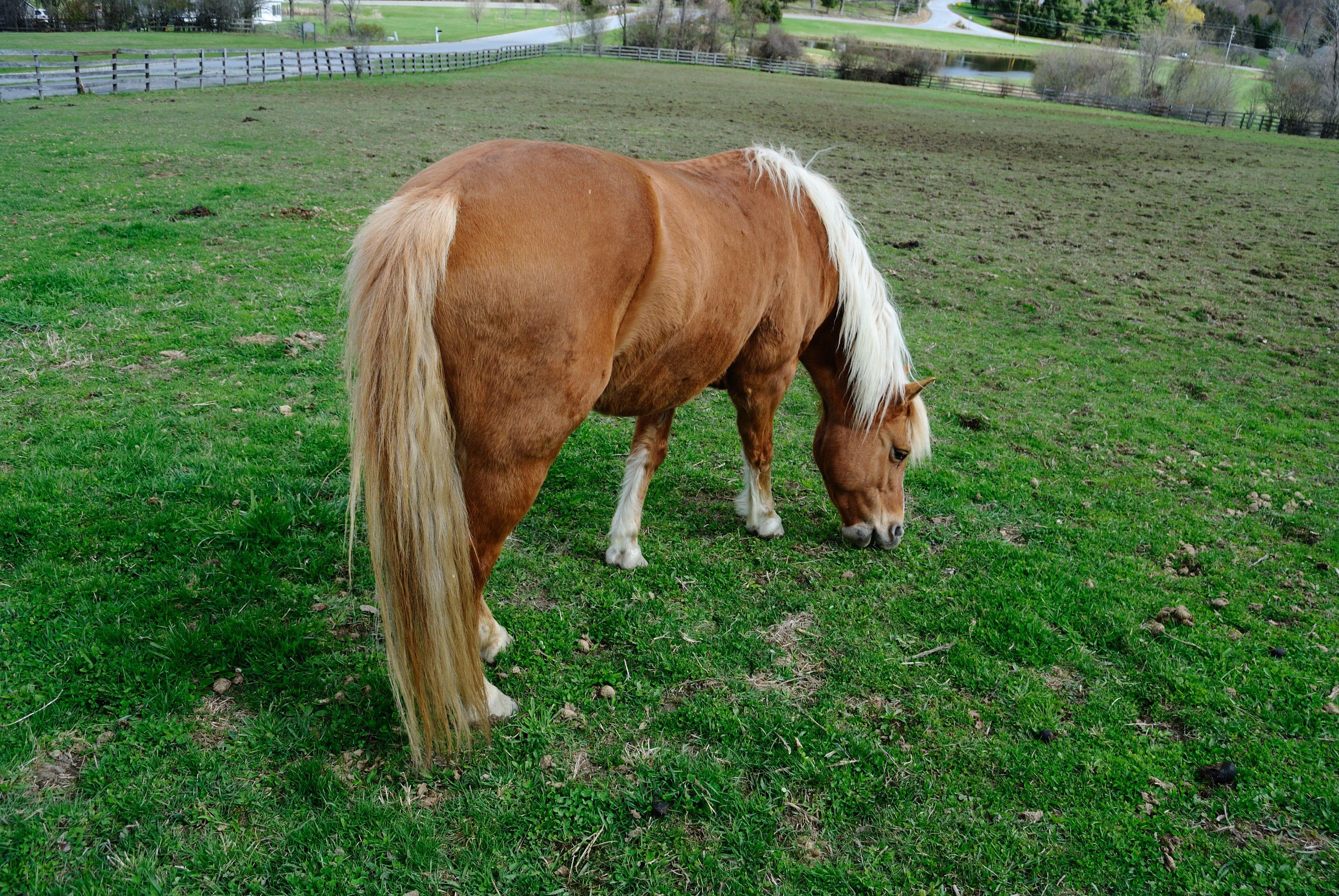 Horse's  Butt