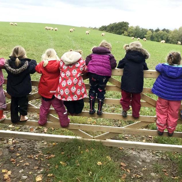 counting sheep.jpg