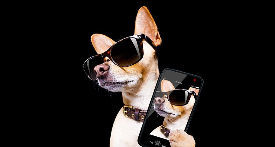 cooldog.jpg