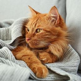 ABU DHABI CAT SITTING