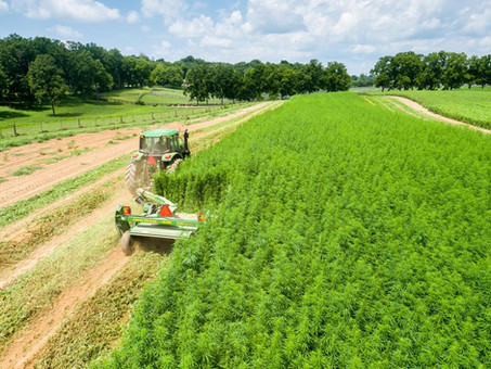 Changing the Hemp Industry