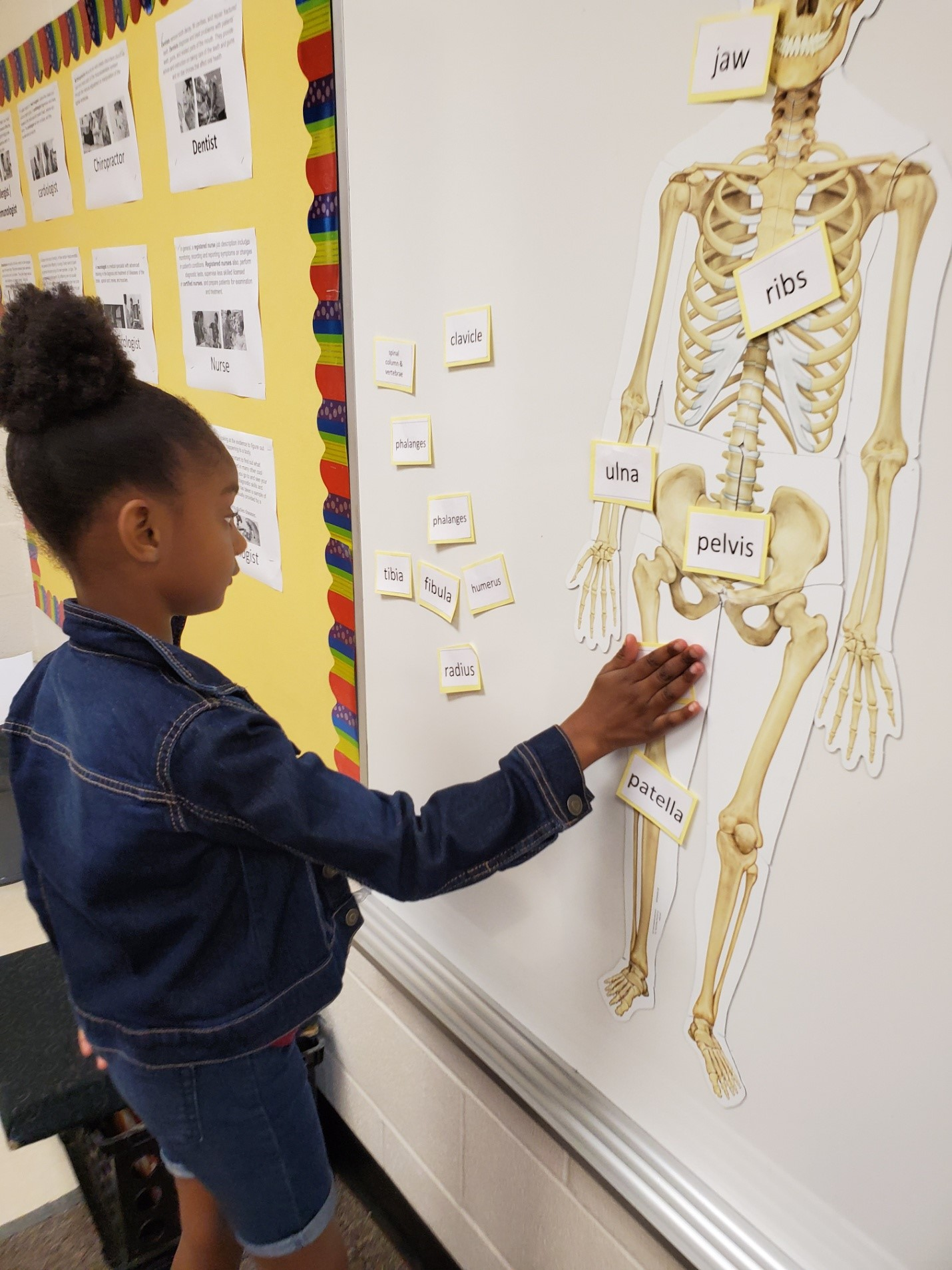 student learning skeletal system