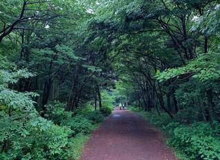 I came back from Jeju Island..