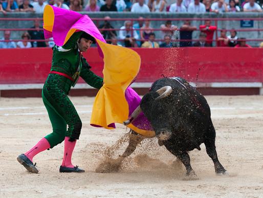 Keine Stierkämpfe durch Corona mehr, dafür Notschlachtung tausender Stiere...